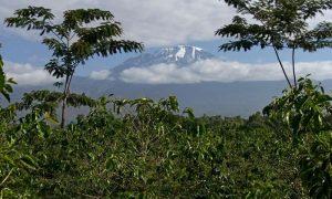 Kilimanjaro's Ecology