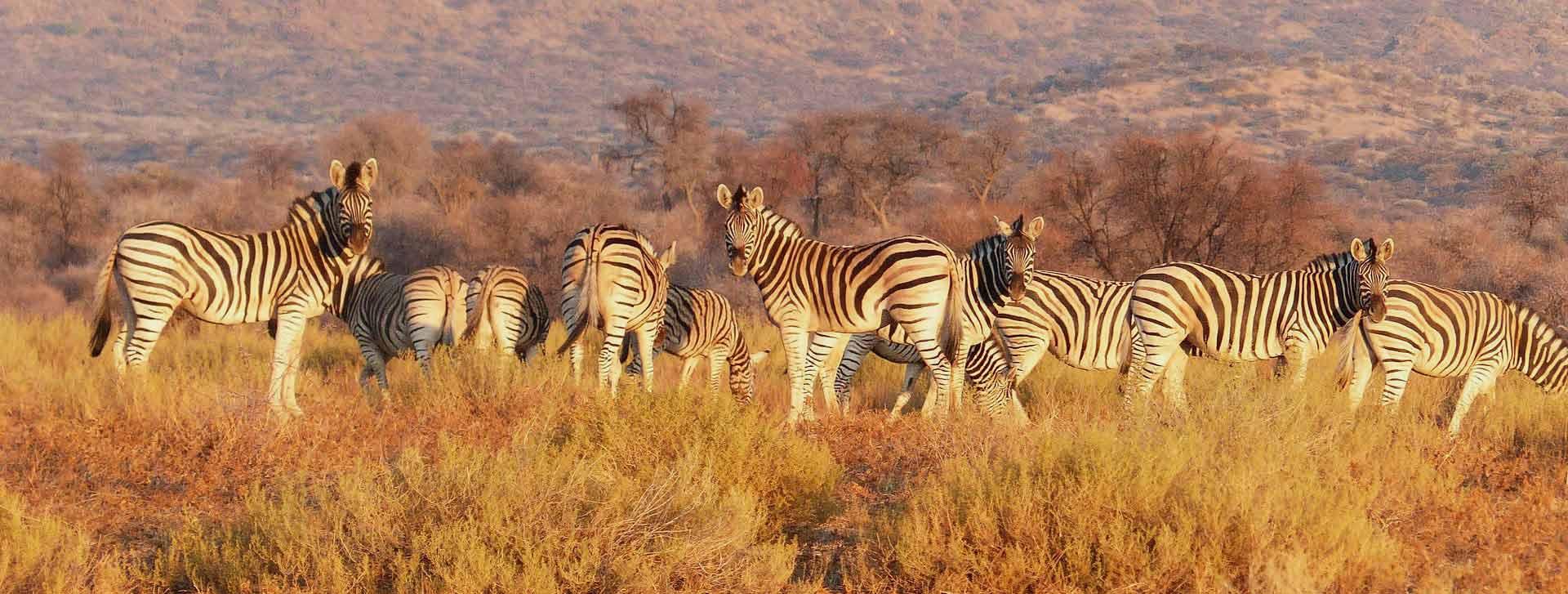 days safari
